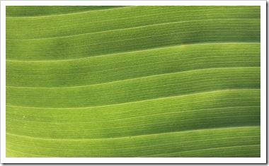 101031_banana_leaf