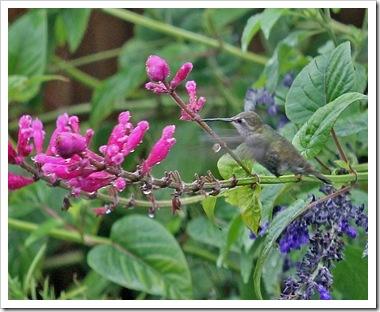 101024_hummingbird