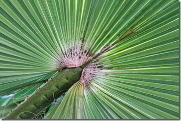 101114_palm_leaf2