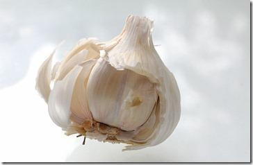 101126_garlic