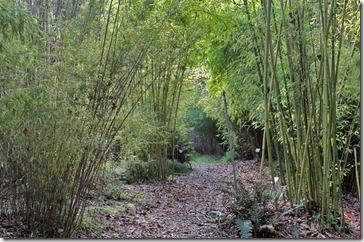 101130_bamboosourcery_clumping_garden