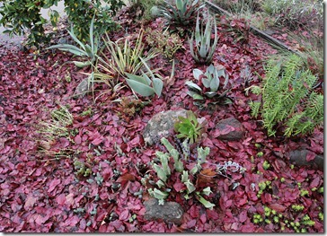 101218_driveway-succulent-bed-before