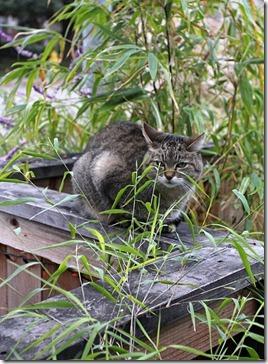 bamboo-cat