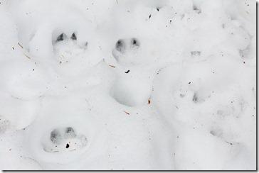 101225_footprint3