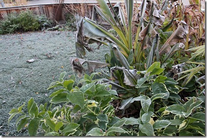 110110_frost_front_yard