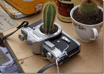 cactus_cam1