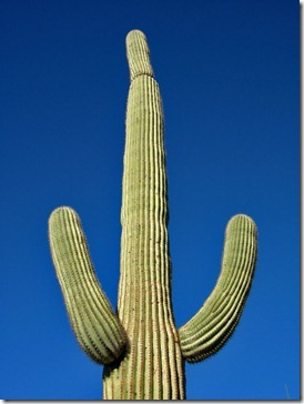 071218_saguaro_light