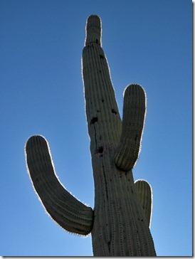071218_saguaro_dark