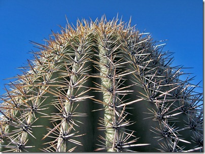 071218_saguaro_closeup2
