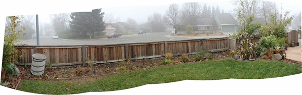 110122_front_yard_inside_fence
