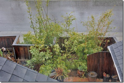 110217_rain_bamboo