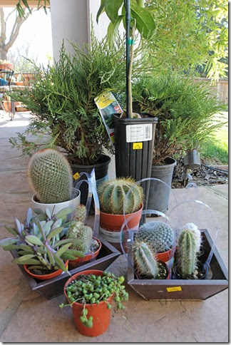 succulents and more great plant deals at lowe s in west sacramento. Black Bedroom Furniture Sets. Home Design Ideas