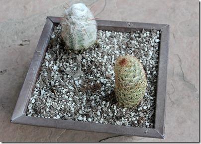 110210_succulent_bowl1
