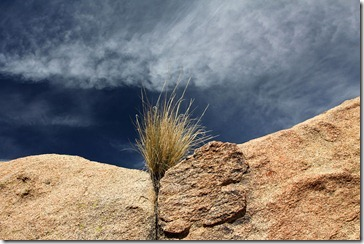 110221_joshua_tree_np_grass_rock_sky