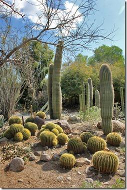 110223_living_desert_cactus_garden