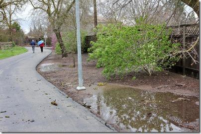110320_greenbelt_puddles