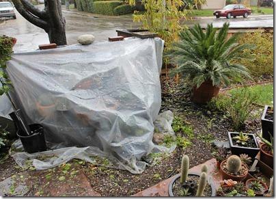 110320_rain_cactus_table