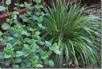110414_Calamagrostis-brachytricha_03