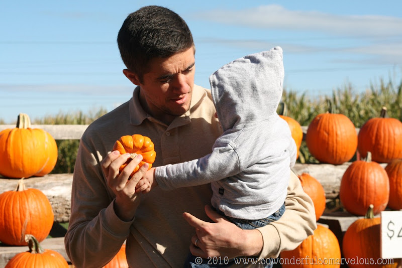 pumpkin patch 111