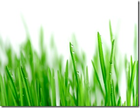 dewongrass