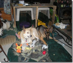 Raina, forest and Molly 056