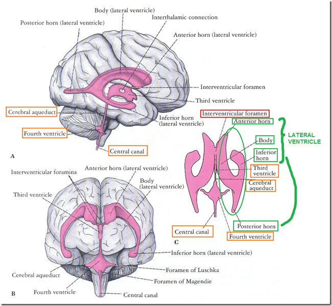 Ventricular system cerebrospinal fluid medatrio lateral ventricles ccuart Choice Image