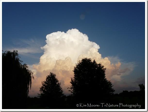 Cloud & trees