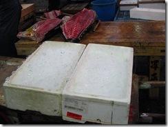 13Japan-FishMarket 025