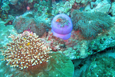 Thailand underwater photo scuba diving