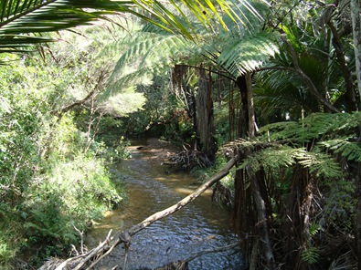 Creek, Whangaparapara Road