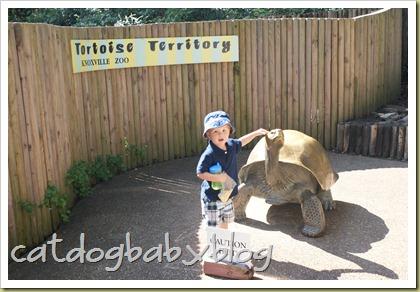 2010-09-29 k'ville zoo (3)