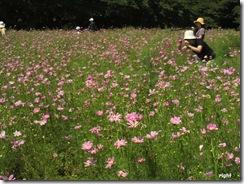 お花畑で一生懸命。