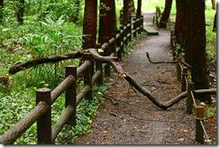 雨の日曜、森に行く8
