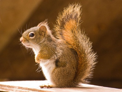 DSC_1539_squirrel[1]