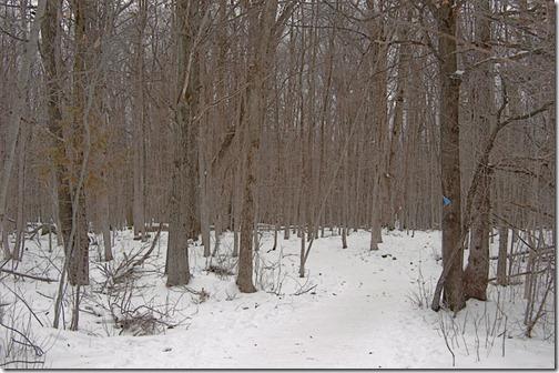 DSC_7207_woods