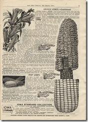 seed catalog corn