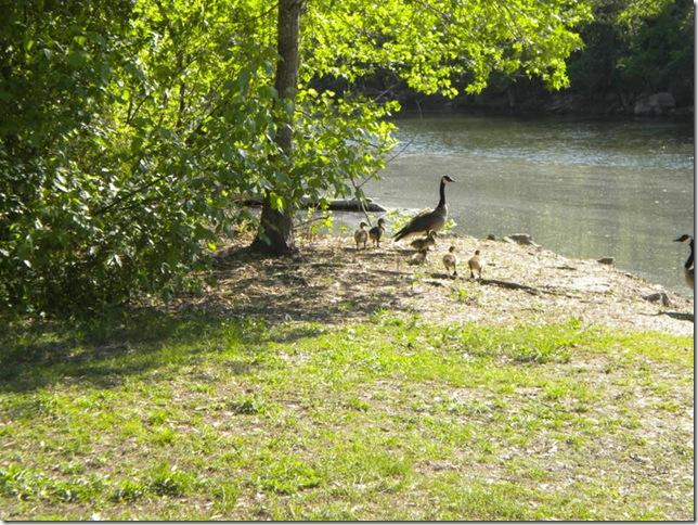 04-29-10 Turkey Creek RV Park 003