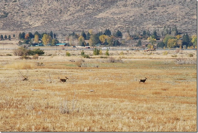 10-24-09 A Washoe Lake State Park 012a