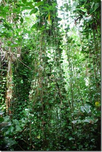 10-25-10 Biosphere 2 065