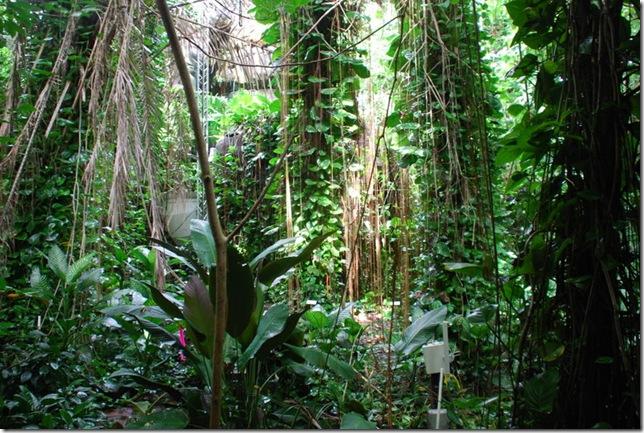 10-25-10 Biosphere 2 067