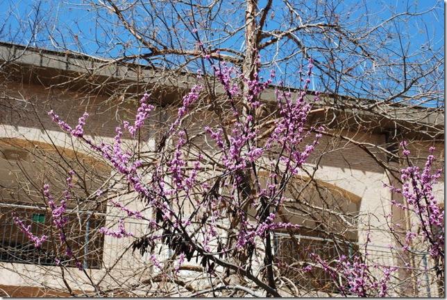 03-02-11 San Antonio Riverwalk 057