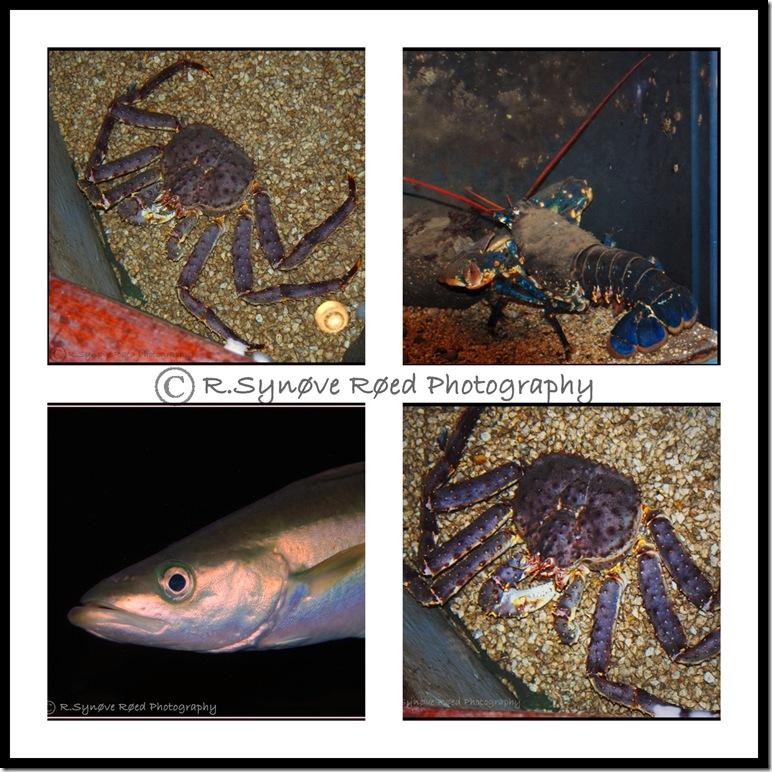 Montasje akvariet drøbak