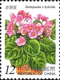 flower china 2b