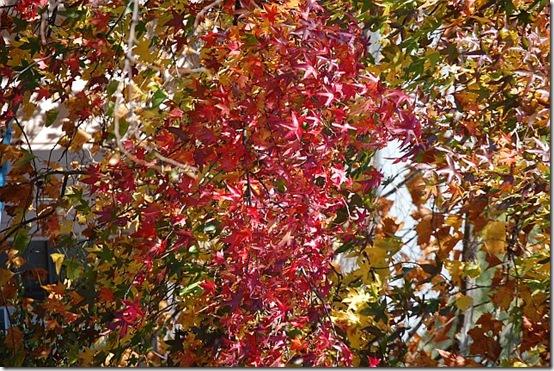 fall7