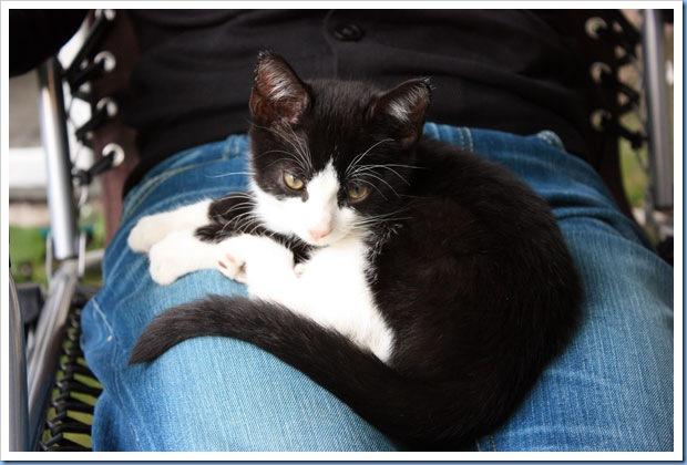 katter2
