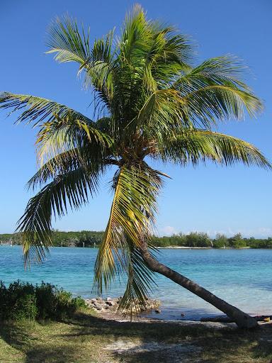 Un des palmiers de lîle