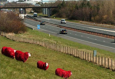 red-sheep (2)