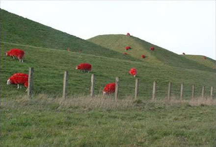 red-sheep (4)
