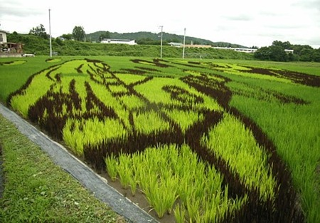 rice-paddy-art (14)