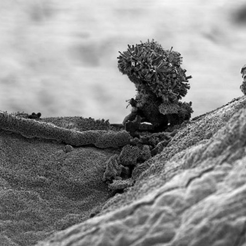 Landscapes from the nano world by Michael Oliveri